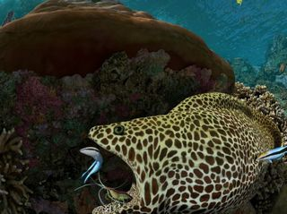 No Barrier to this Reef: Dazzling Film Brings Coral to Life in GPU-powered Museum Show