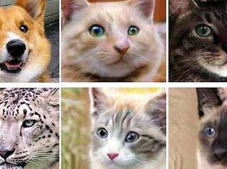 It's Training Cats and Dogs: NVIDIA Research Uses AI to Turn Cats into Dogs, Lions and Tigers, Too