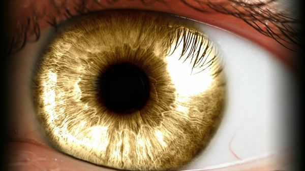 An AI for an Eye: How Deep Learning May Prevent Diabetes-Induced Blindness