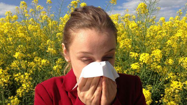An App for Sore AIs: Research App Seeks to Predict Seasonal Allergies