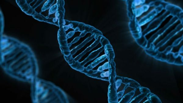 Real-Time DNA Sequencing in the Palm of Your Hand