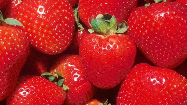 How Robots Could Save Strawberries, Green Agriculture, and Feed a Growing Population