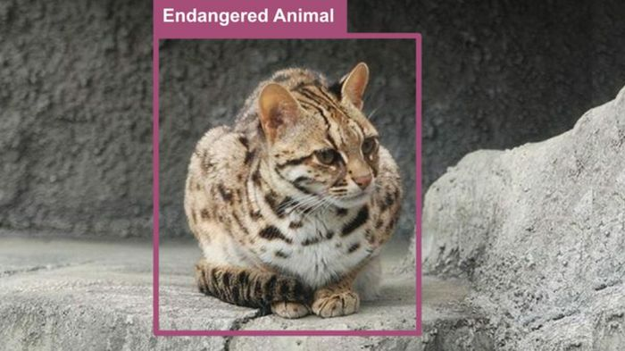 How AI Is Helping Protect Taiwan's Endangered Leopard Cats