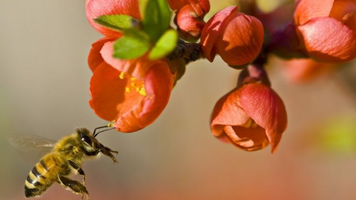 Buzzworthy AI: Startup's Robo-Hives Counter Bee Population Declines