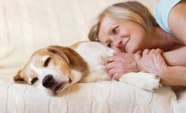 Estate Planning For Your Pets