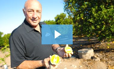 Learning Curve: Perricone Farms