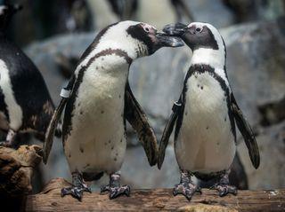 Splash Zone & Penguins