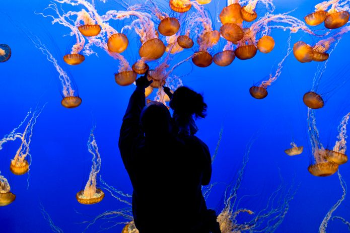 A father and his daughter viewing the sea nettles in the Open Sea exhibit. ©Monterey Bay Aquarium