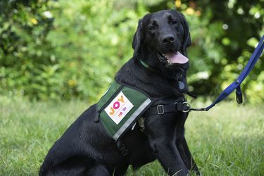 """Joy in Childhood Foundation® Unleashes """"Dogs for Joy"""""""