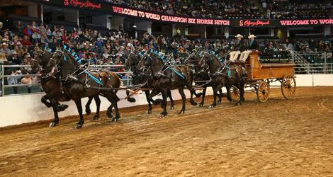 World Championship Six Horse Hitch Grand Champion
