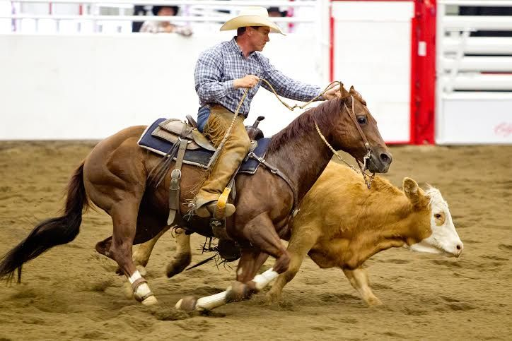 2014 Stampede Working Cow Horse Competition