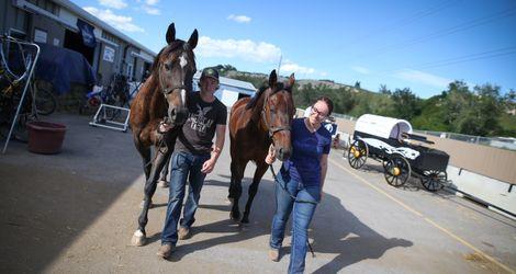 ringuettes horses
