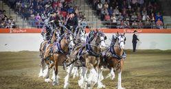 Heavy Horse show-4
