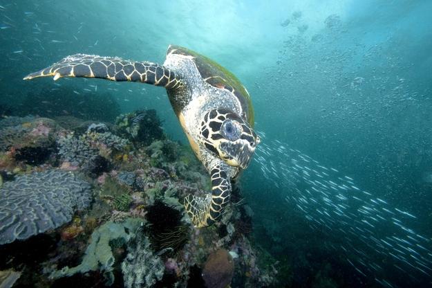 Mary Kay se ha asociado con The Nature Conservancy en un proyecto para empoderar a las mujeres a través de ecoturismo en las Islas Salomón, brindando oportunidades económicas y apoyo para la conservación de las tortugas carey.