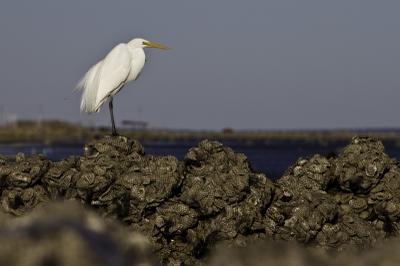 The Nature Conservancy, en colaboración con Mary Kay, está ayudando a proteger la biodiversidad y los recursos marinos reintroduciendo la ostra nativa europea.
