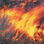 Wildfire ignition risks rise as temperatures climb