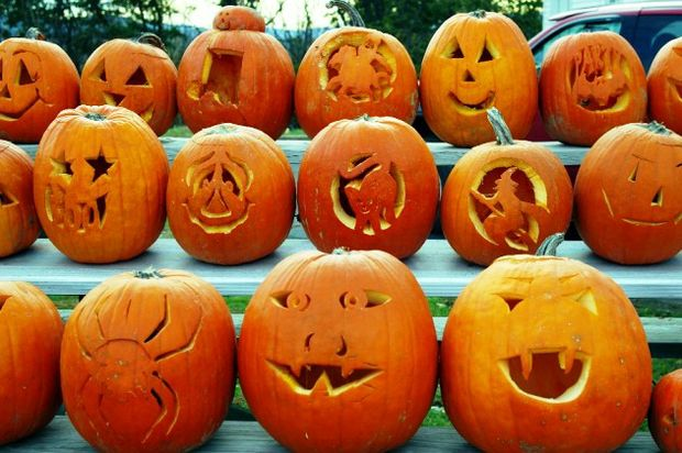 rows of carved pumpkins