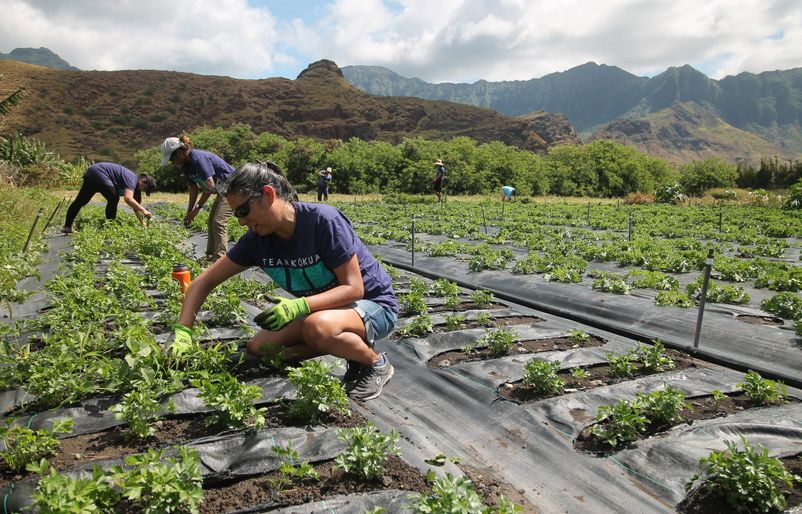 Getting Back to the Roots at MA'O Organic Farms