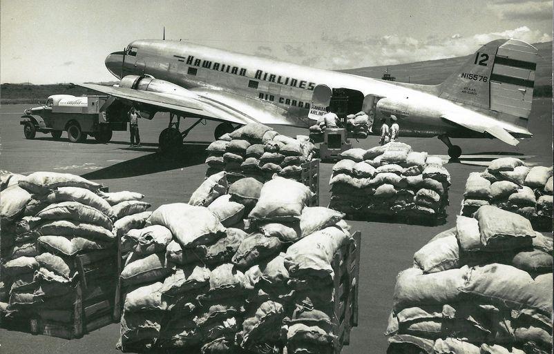 1950 Pine tops
