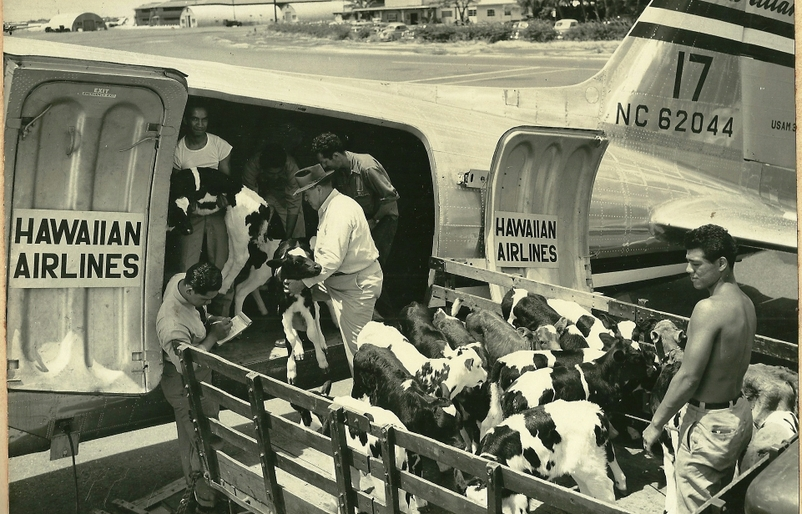 Flyback Friday: A Hawaiian Airlines Helicopter? (and Other Fun Cargo Photos)
