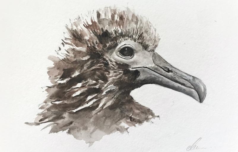 Charlie Sea Bird Watercolour