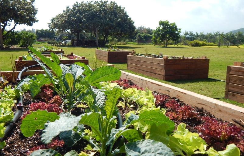 Garden near cafe