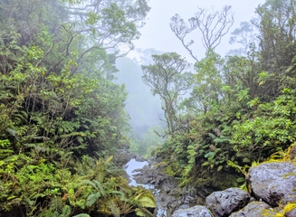 Giving Tuesday: Preserving Maui's Forests and Birds