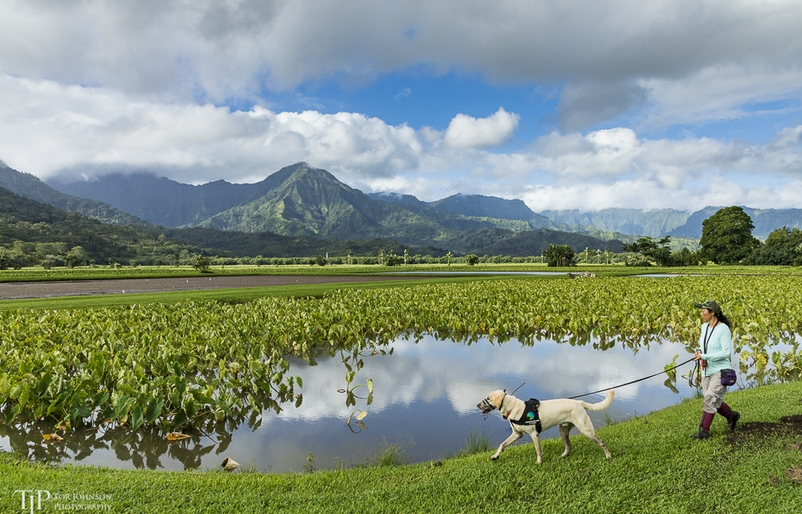 K-9 Kōkua: How Detection Dogs Are Bolstering Local Conservation Efforts