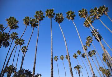Palms - Santa Monica