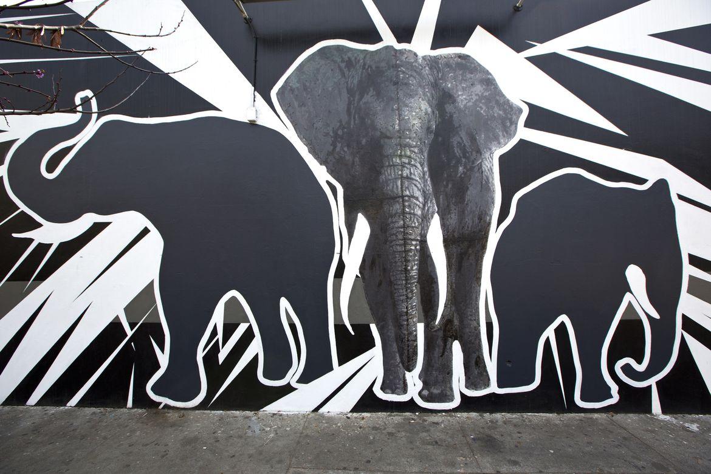 Say No To Ivory - Street Art