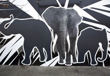 Say No To Ivory - Street Art
