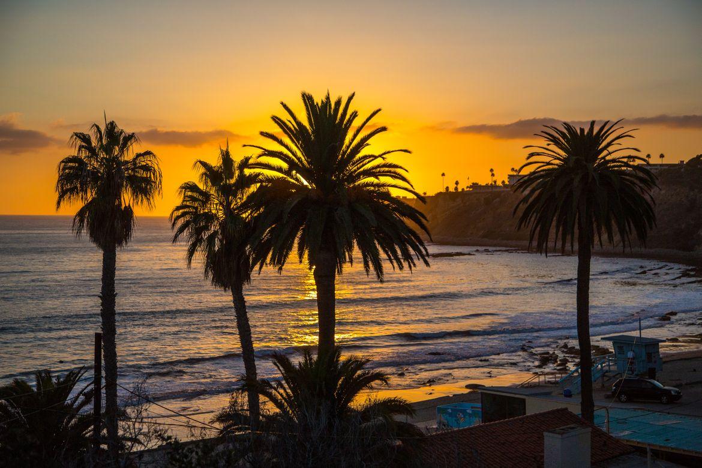 Palms & ocean at sunset