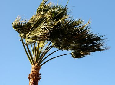 Strong and Prolonged Santa Ana Winds to Blow Through SoCal