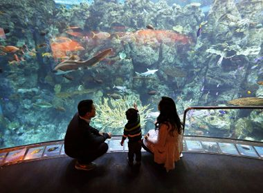 Aquarium of the Pacific Shines a Light on Energy Savings