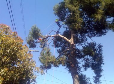 safety guidelines working near telephone lines overhead