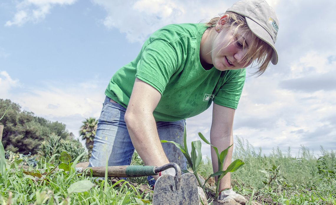 Urban Farm Gets TLC From Volunteers