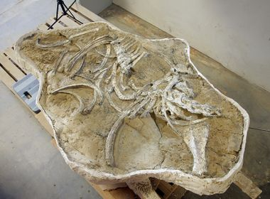 Major SCE Fossil Find to Get Its First Public Viewing