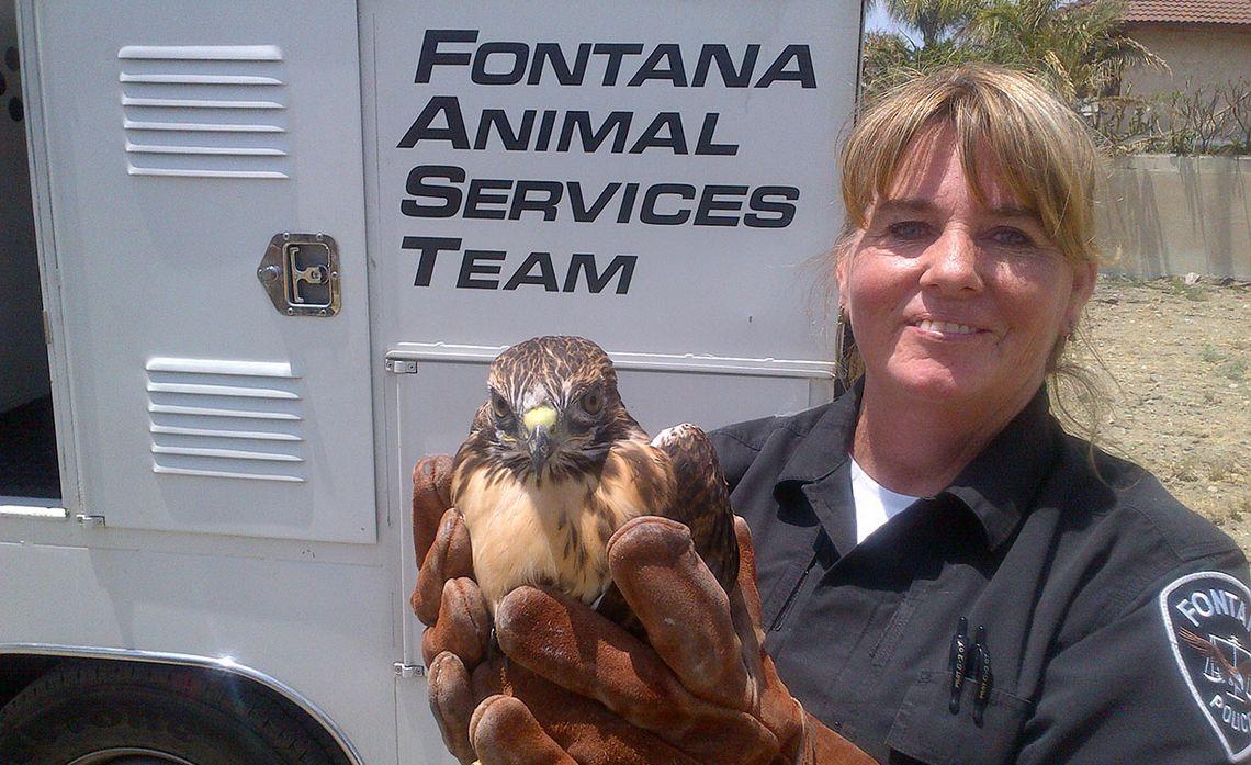 Hawk Rescue
