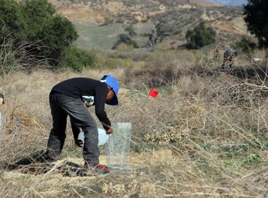 Nonprofit Holds Acorn Planting Event to Ensure Survival of Oak Trees
