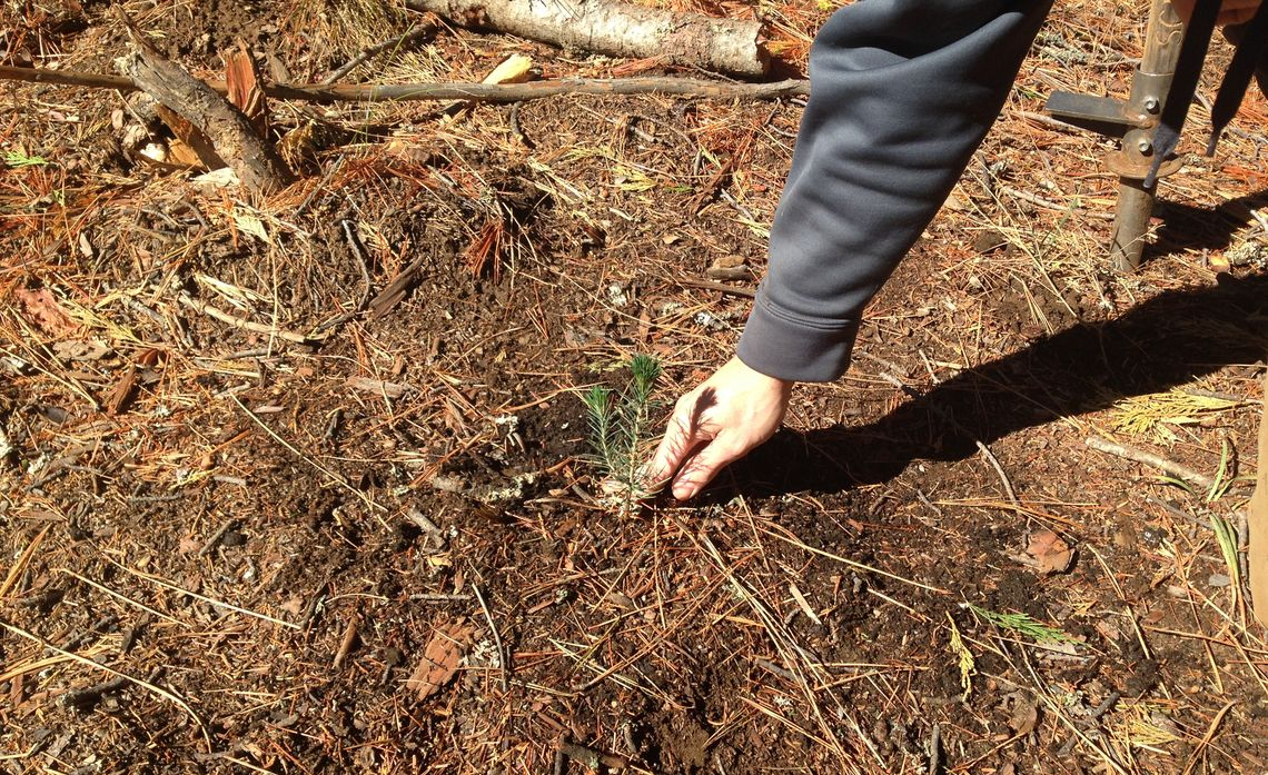 Wildfire Seedling Program