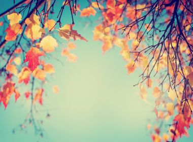 Energy Efficient Ways to Prepare Your Home for Fall Weather
