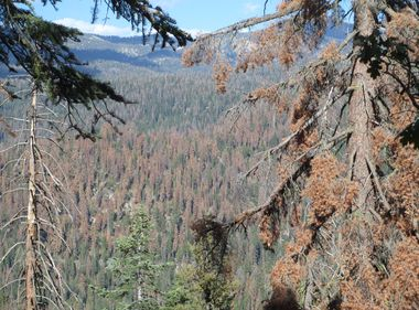 SCE Steps Up Wildfire Preparedness in the Sierra Nevada