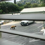 A Bear Visit