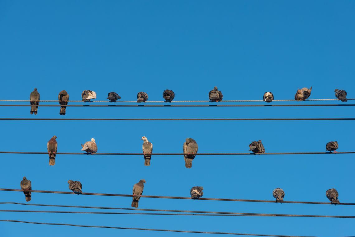Birds on power lines