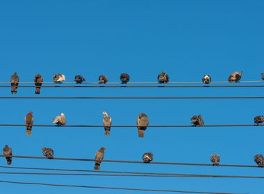 Why Can Birds Sit Safely on Power Lines?