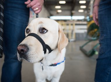 Employees Help Raise Future Special Assistance Dog