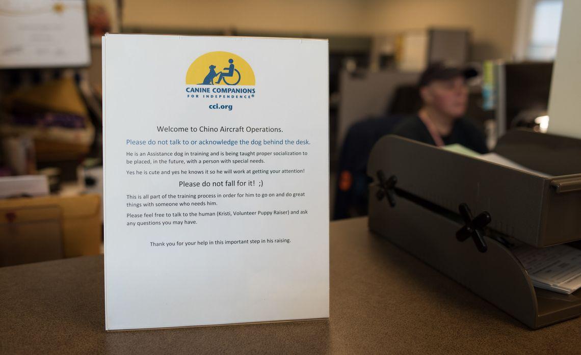 Employees Volunteer as Puppy Raisers
