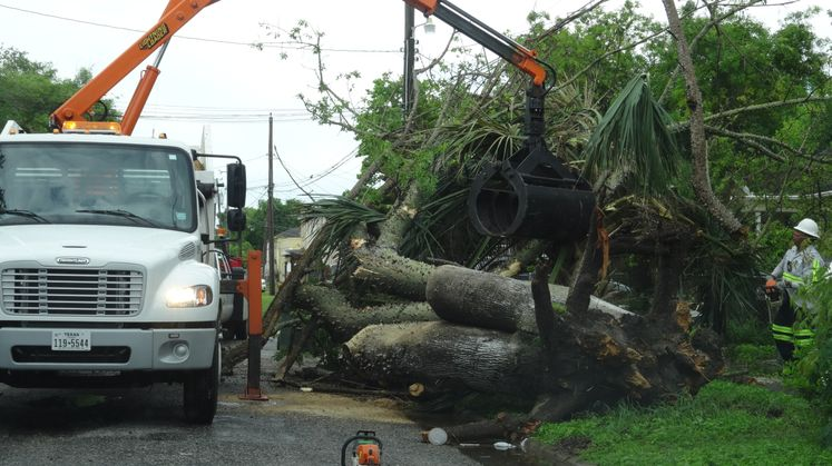 Tree Cleanup 2015