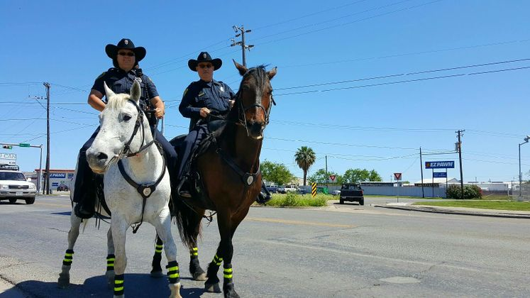 CCPD's Mounted Police