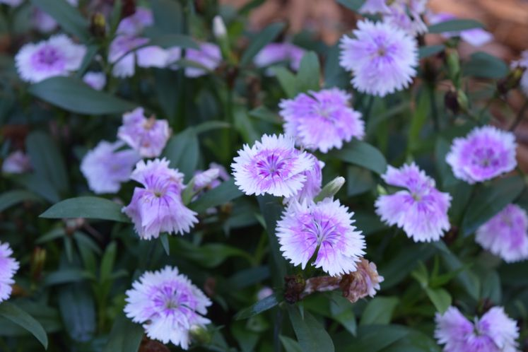 Xeriscape Flowers and Plants